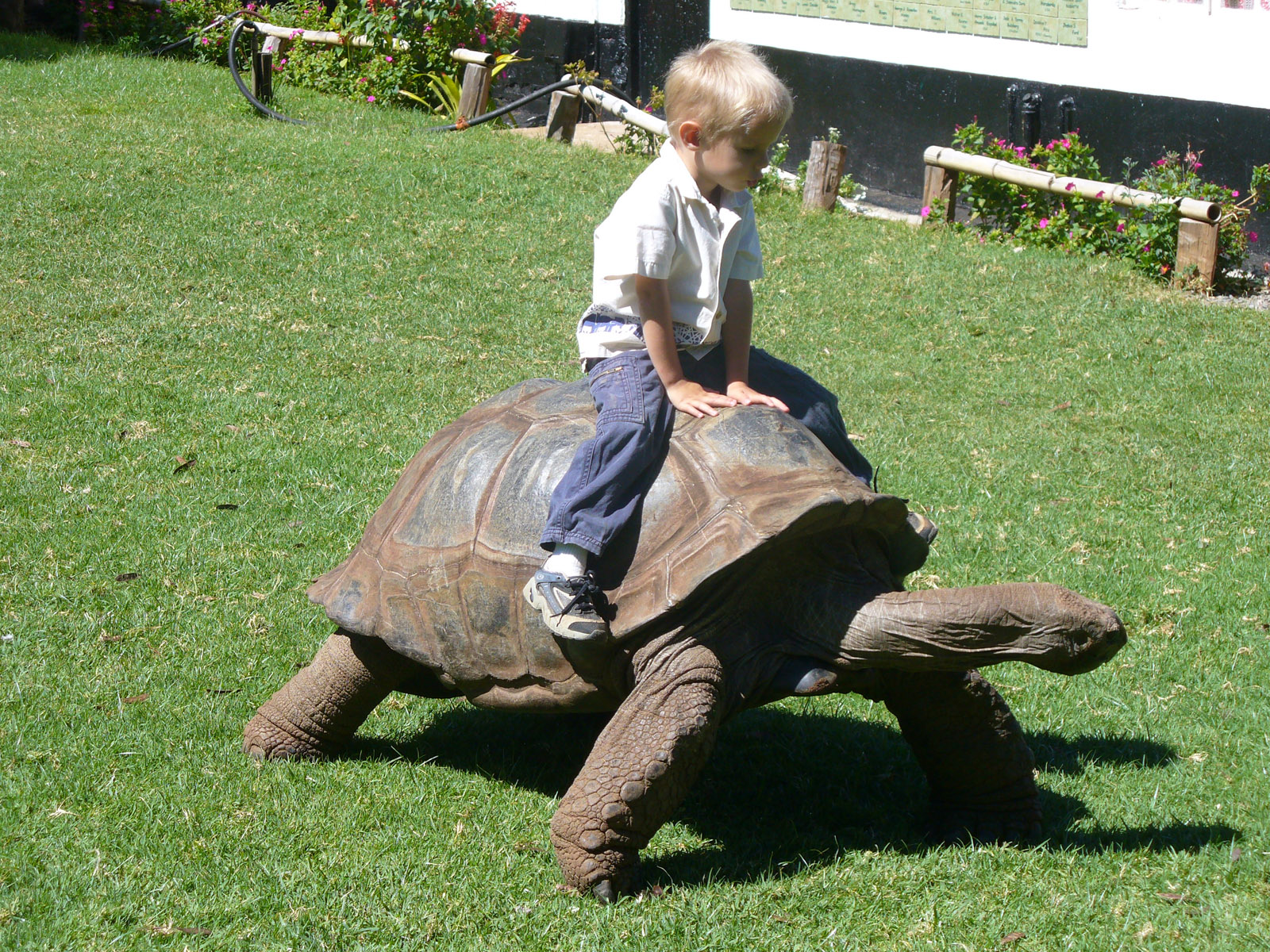 child_riding_tortoise